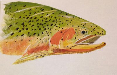 Illustration, cutthroat, fishing, schools, lessons, clinics.