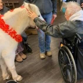 Nursing home petting zoo