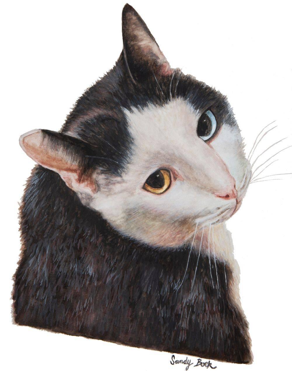 sandy bock, pet portrait, cat, portrait artist, portrait art, custom portrait painting