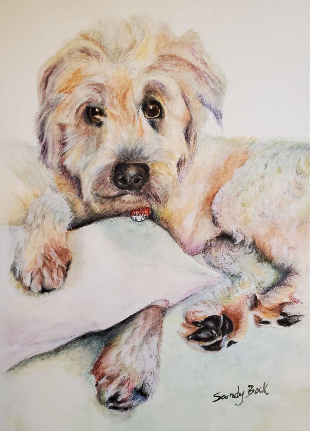 dog, pet portrait, pets, portrait art, watercolor