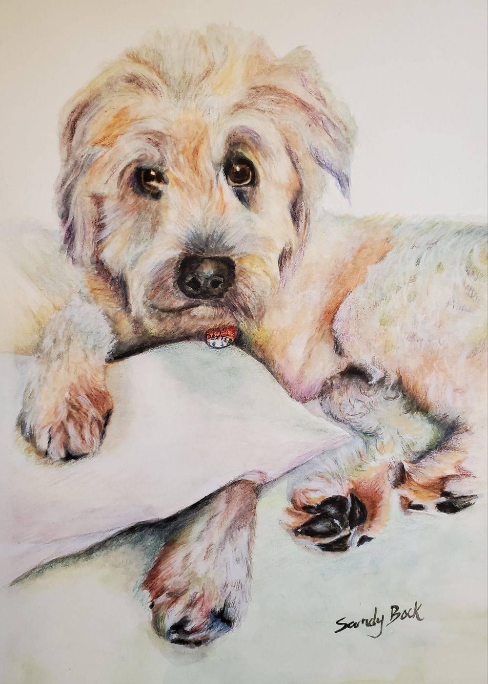 sandy bock, pet portrait, portrait artist, custom portrait painting, portrait illustration, dog portrait, portrait art