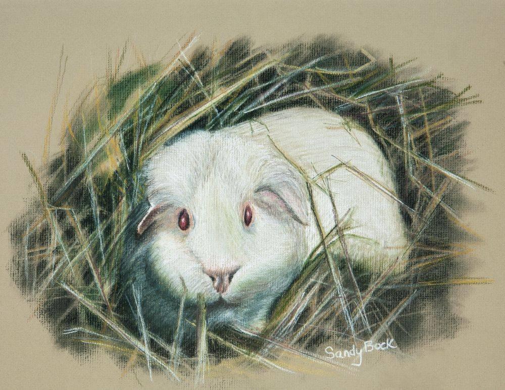 sandy bock, portrait artist, pet portrait, guinea pig, pet art, portrait art, custom portrait painting