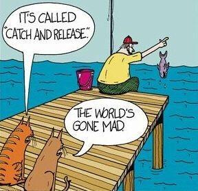 cats, fishing, dock, pier, fisherman