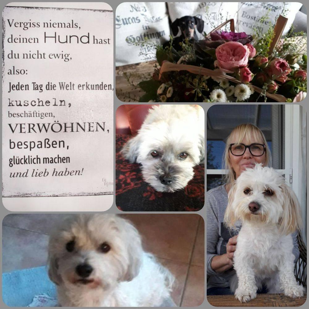 Hundebetreuung, Hundepension Struvenhütten bei Hamburg und Schleswig-Holstein