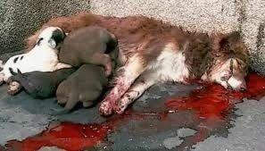 toter hund und säugende welpen