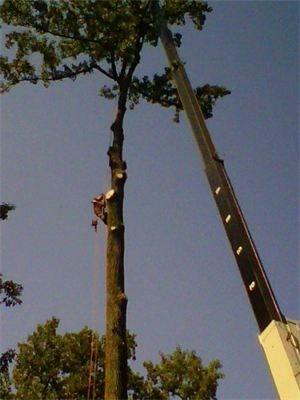 Arundel Tree Service Crane Service in Arnold Maryland