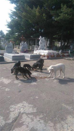 Futterspenden für die Friedhofshunde in Rumänien.