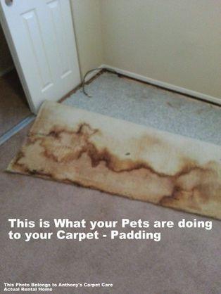 Pet Odor Cleaning Modesto, CA