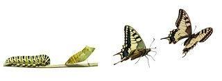 évolution et qualité de vie