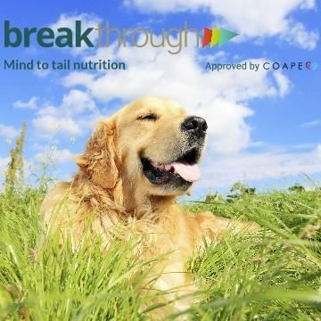 Breakthrough dogs are happy dogs!