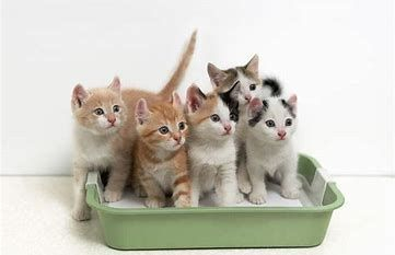 Litter box change service