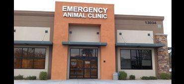 Animal dermatology Avondale Arizona, Veterinary Dermatology Avondale, dog dermatolgoy avo