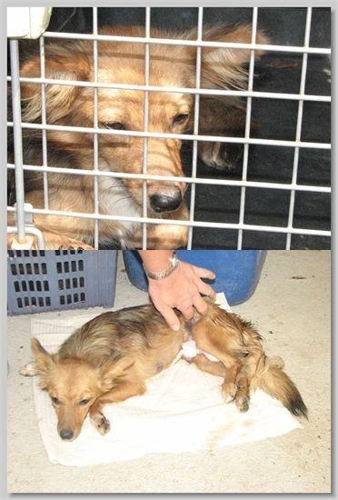 hundehilfe thailand kastr. hündin -lek-27.05.13