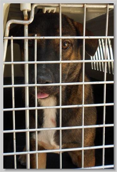 hundehilfe thailand. hündin -kon- kastriert 18.01.13