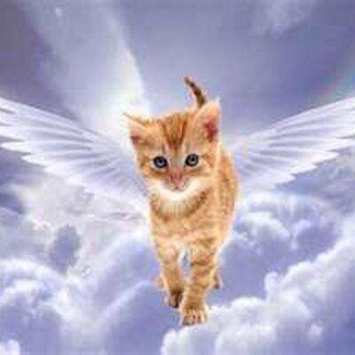 Animal Angelic Reiki Healing Reiki Master Helius Andreas