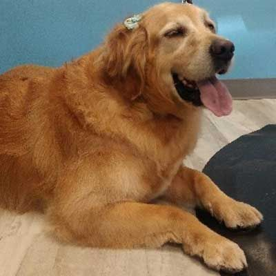 Happy Groomed Dog at Pampered Paws