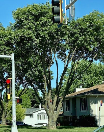 Disfigured tree with poor health