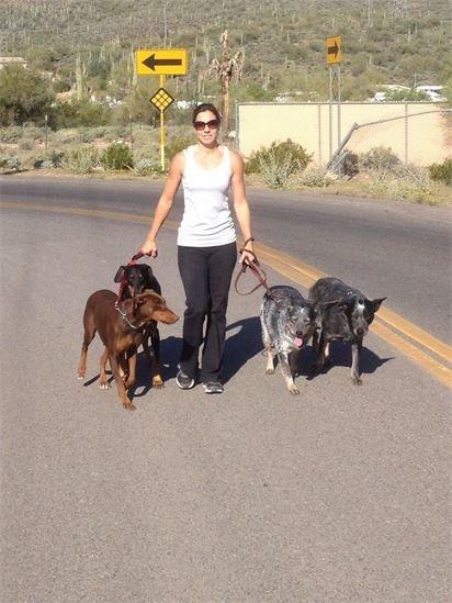 dog walker Anthem Arizona
