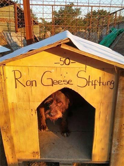 Tierheim -Sopen- in Izmir Türkei. Ron Geese Stiftung. Das Recht der Tiere.