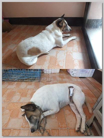 hundehilfe thailand kastr. hündin -nohp-18.07.13