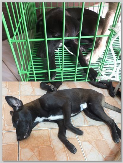 hundehilfe thailand kastr. hündin -maa-17.07.13