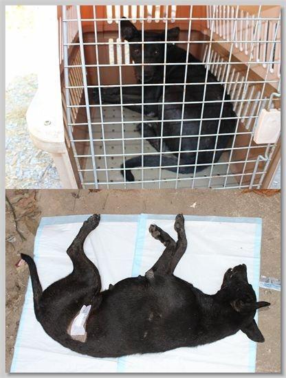 hundehilfe thailand kastr. hündin -tuk nr. 38 am 11.01.14