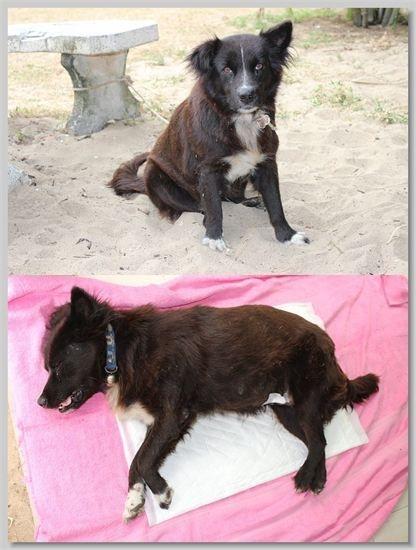 hundehilfe thailand kastr. hündin -ploy nr. 36 am 06.01.14
