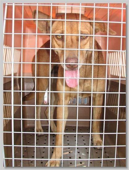 hundehilfe thailand kastr. hündin -talila-