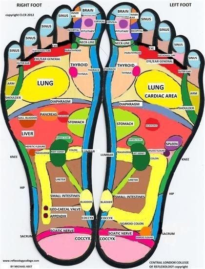 reflexology foot map maternity