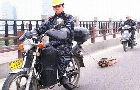 chinese schleift hund hinter moped hinterher.