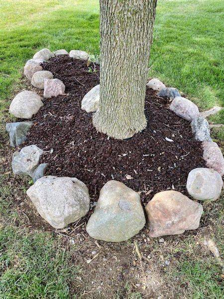 Picture of Rubber Mulch around Tree