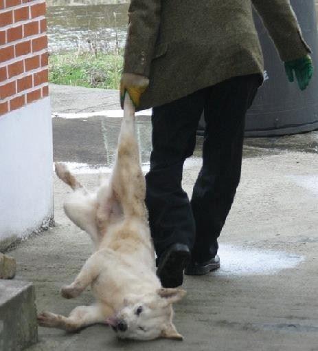 hund weggeschleift