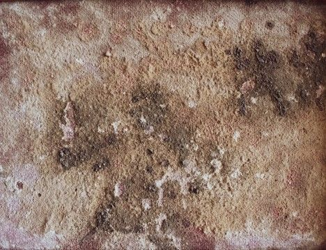 Mold and rot can significantly weaken your home