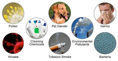 dirt in home chemicals cleaning pet dander
