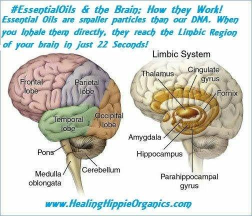 Essential Oils and the Brain, Healing Hippie Organics, Boise, Idaho, USA