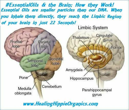 Essential Oils and the Brain, Healing Hippie Organics, Boise, Idaho, USA