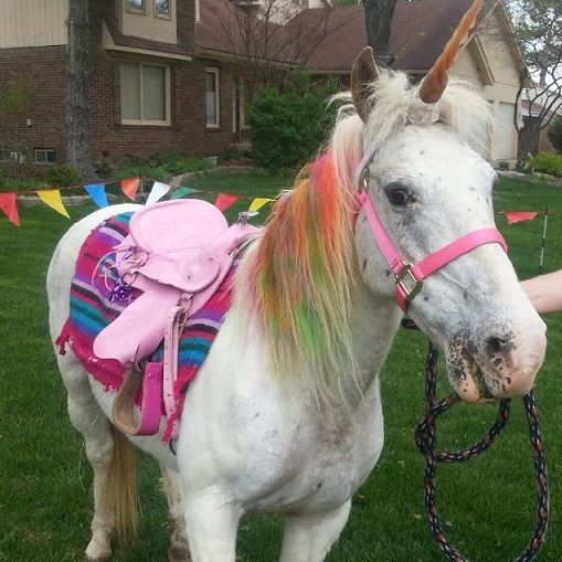 Pony dressed as unicorn with pink saddle