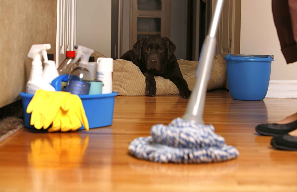 house cleaning plano