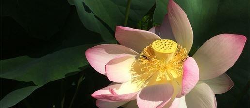 Shiatsu, Shiatsu Bern, Massage Bern, Narbenbehandlung, Biokinematik, Schmerzen behandeln, Narbenentstörung.
