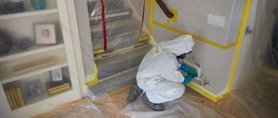 Mold Testing and Removal San Francisco CA
