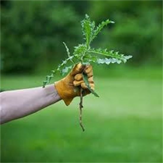 Any plant that grows where you don't want it can be considered a weed.
