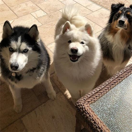 Paws On Pet Sitting New River Arizona