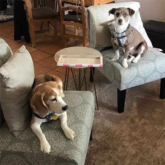 Phoenix Arizona, dog boarding, paws on pet sitting