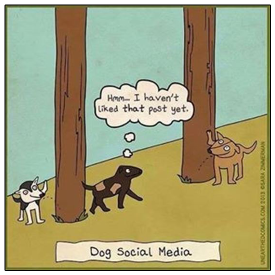 Visit and like us on Facebook to see happy, healthy dog photos