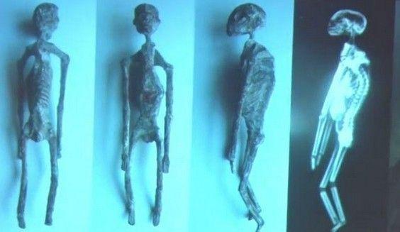 Les Extraterrestres de Nasca-Alien Project-Ces créatures ne sont pas humaines selon les scientifique