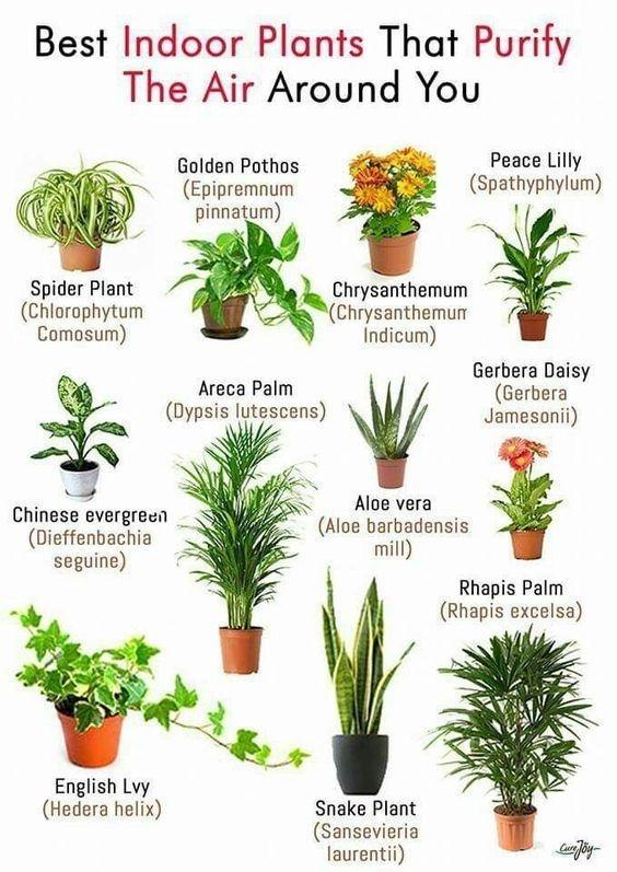clean air plants, snake plant, aloe vera,  Healing Hippie Organics, Boise, Idaho