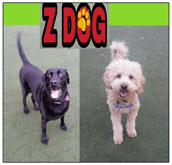 Natalie, Jose & Chocolate Z will provide you with superior dog walks & cat care, pet sitting & boarding, and dog day care.