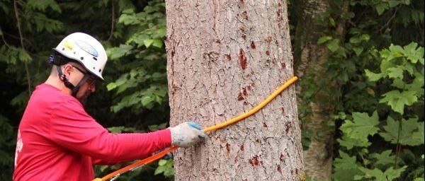 tree climber service amherst