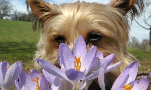 aromatherapy for pets debbie kameka