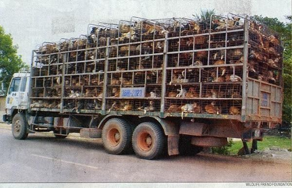 hundetransport in spanien